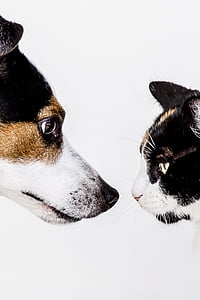 black-brown-and-white dog and cat with white background