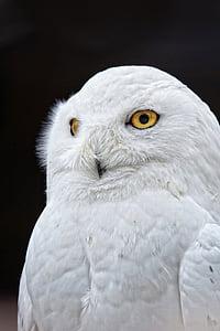 closeup photo of white owl
