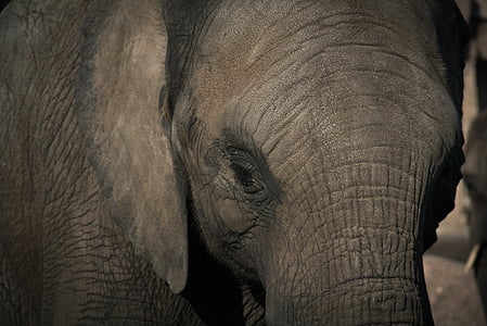 photo of black elephant