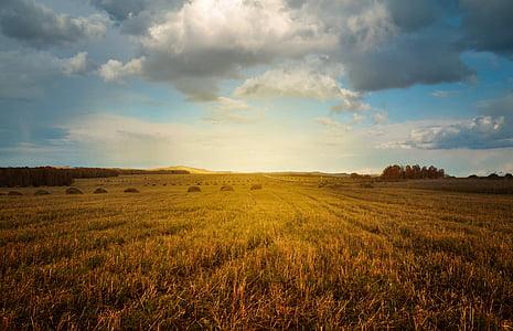 brown grass field under cloudy sky