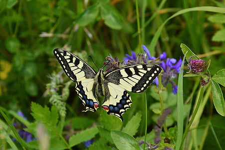 tiger swallowtail butterfly in closeup photo