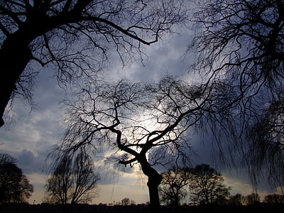 silhouette of bare trees under grey cloudy sky