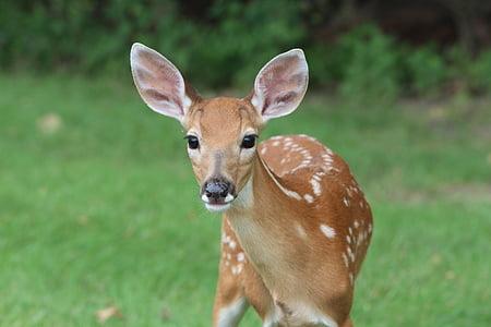 brown deer outdoor