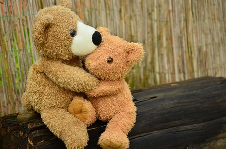two brown bear hug each other