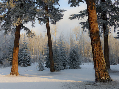 landscape photo of snow-coated forest photo taken during daytime