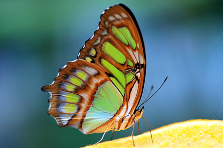 green and brown butterfly in close-up photography during daytime