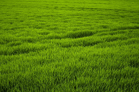 field with green gras