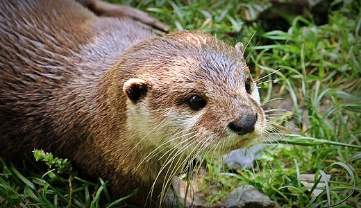 brown and beige fur animal