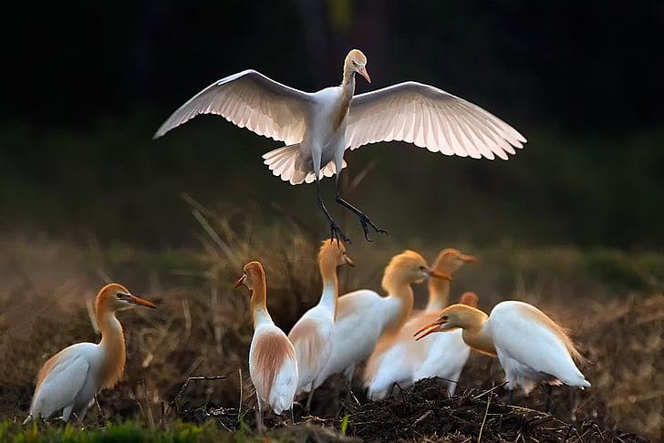 flock of long-beak birds
