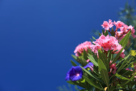 view of violet and pink flowers