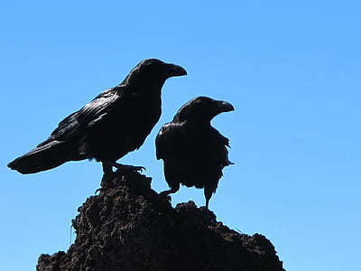 two crows on top of black stone fragment during daytime