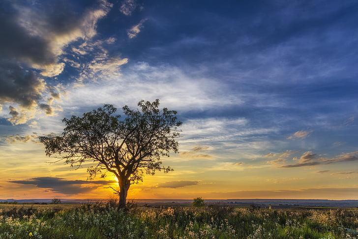 green leafed tree during sunset