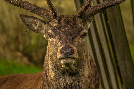 shallow focus photography of brown deer