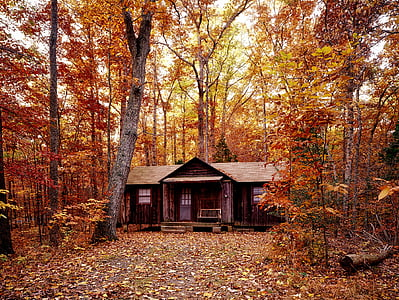 brown wooden house surrounded with maple tree