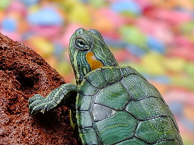 green turtle on brown rock