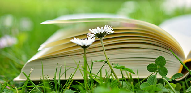 selective focus photo of open book on grass