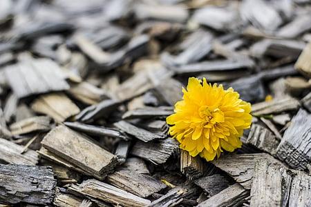 photo of yellow flower
