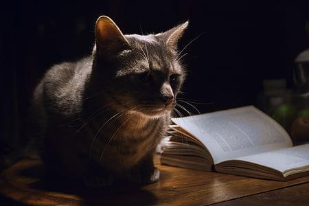gray cat sitting beside white book