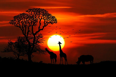 silhouette of giraffe photo