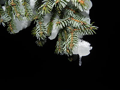 green leaf tree with melt ice