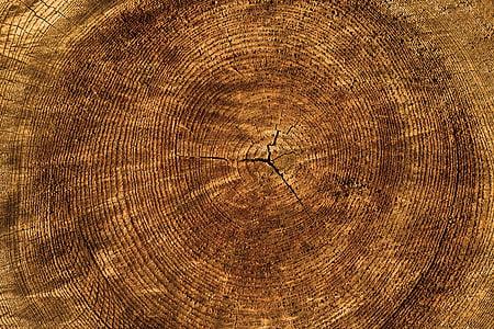 close up photo of brown wood slab