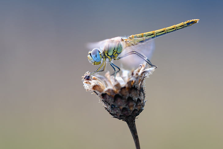 close-up photography of green dragonfly on petaled flower