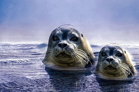 two white and black seals on water illustration