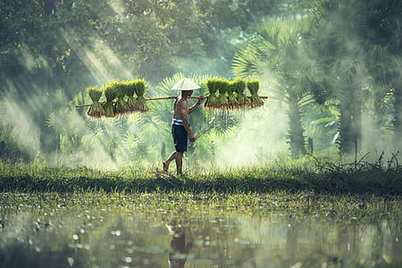 man carrying green plants during daytime