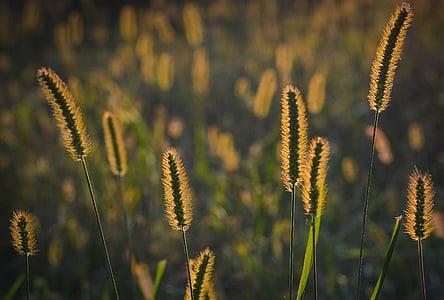 photo of green grasses