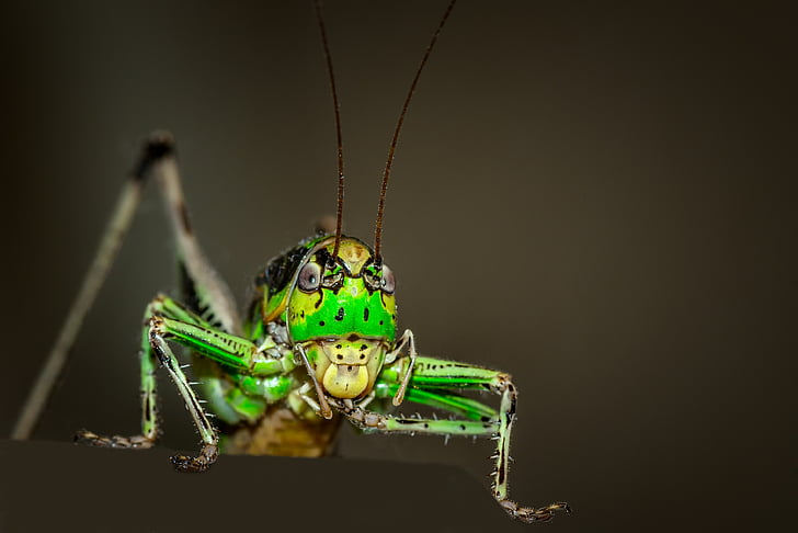 selective focus photography of green Romallea Guttata