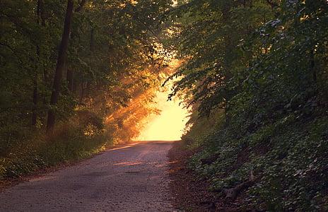 brown pathway between field of green trees