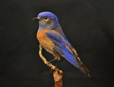 blue and brown bird on tree trunk