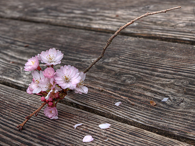 pink petal flower on brown wooden plank