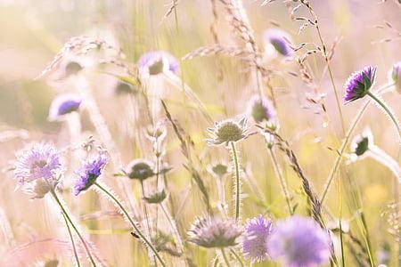 field of purple daisy flowers