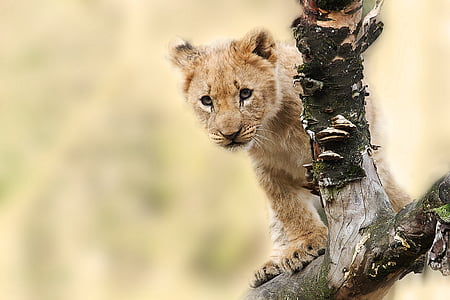 lion cub on tree branch