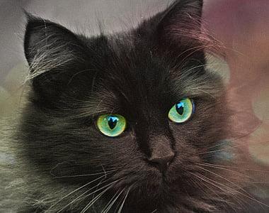short-fur black cat