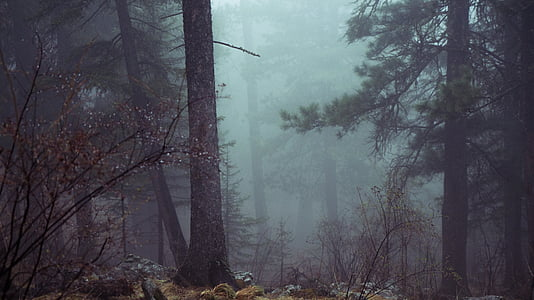 green leafed trees and fog