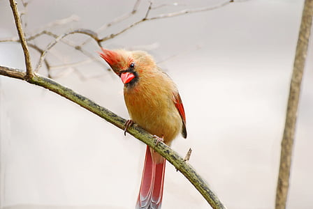 yellow and red bird on green bark
