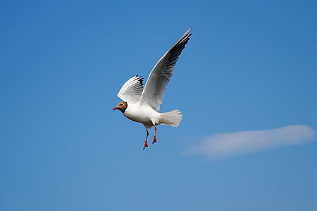 white bird flying under white clouds and blue sky