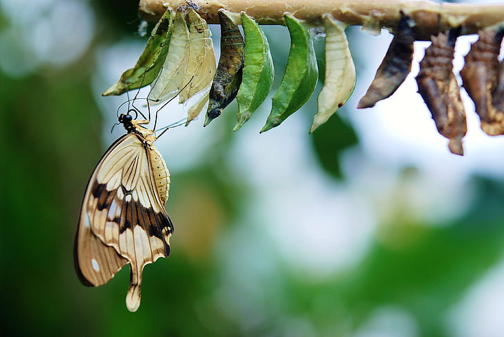 selective focus photography of butterfly perched on leaf