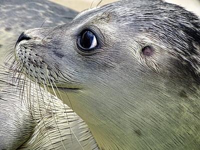 black and gray seal