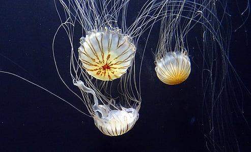 white jellyfish on body of water