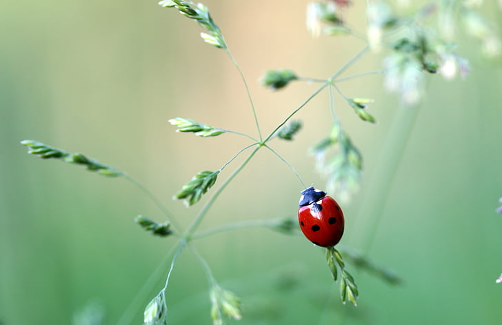 shallow focus photography of ladybird