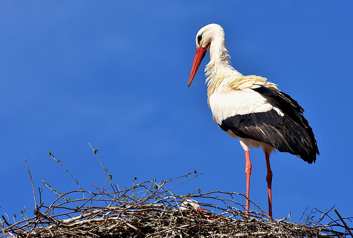 white and black long-beak bird
