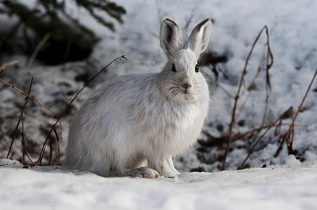 white rabbit during winter