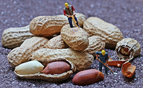 two construction worker miniatures opening peanuts