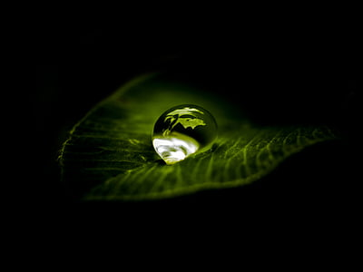 macro photography of water drops into the leaf