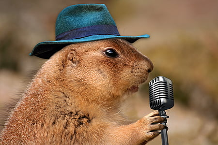 rodent holding gray microphone