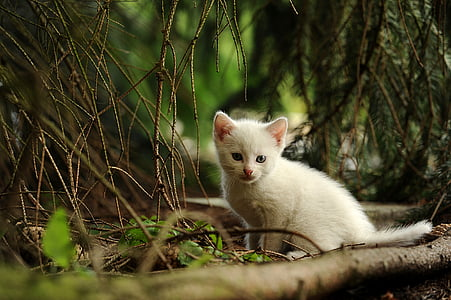 depth of field photograph of white kitten in forest