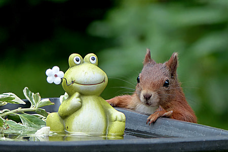 green and white ceramic frog and brown squirrel